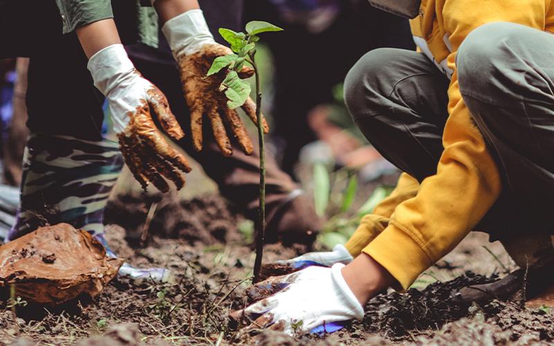 planta un arbol cuida de la capa de ozono