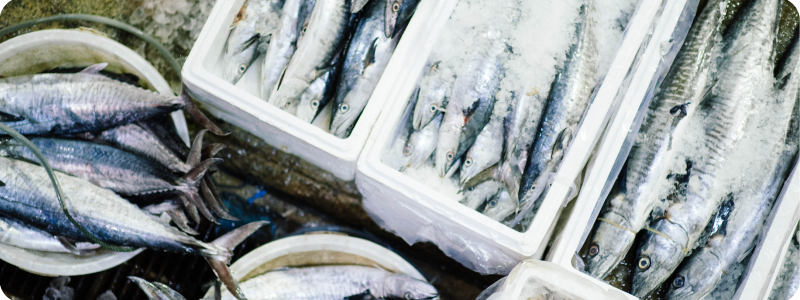 Diversifier consommation poisson